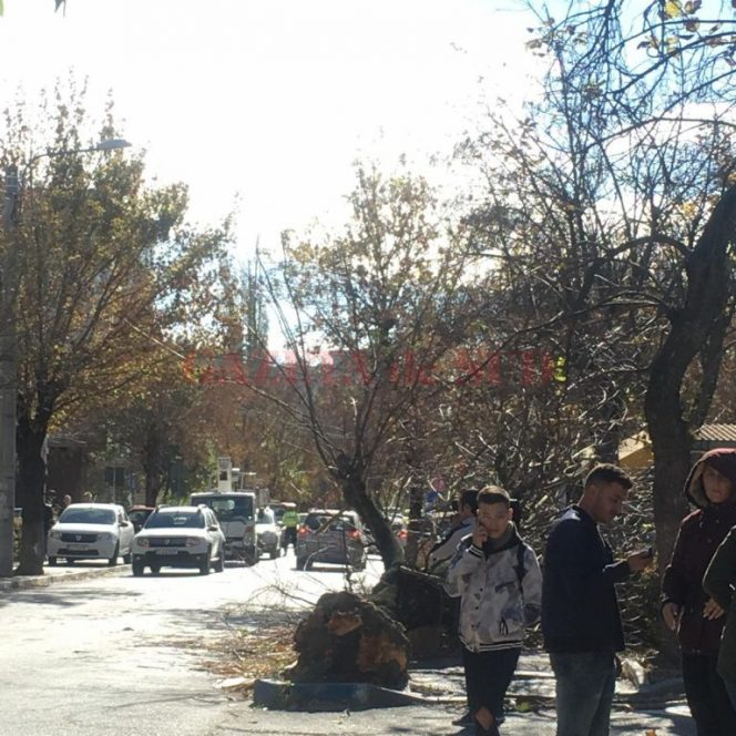 Copacul căzut peste femeie în Craiova