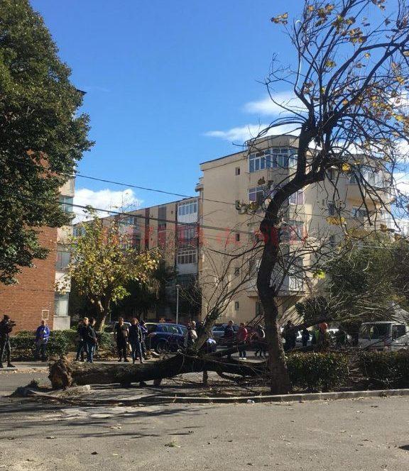 Copacul dărâmat în fața unui bloc din Craiova