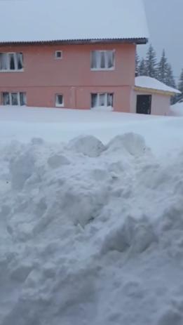 troiene de zăpadă