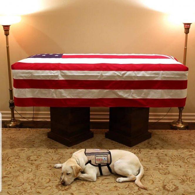 Câinele lui George Bush, la sicriul acestuia
