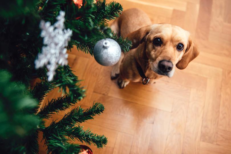 O familie din Timișoara, salvata de la moarte de câine, în noaptea de Crăciun