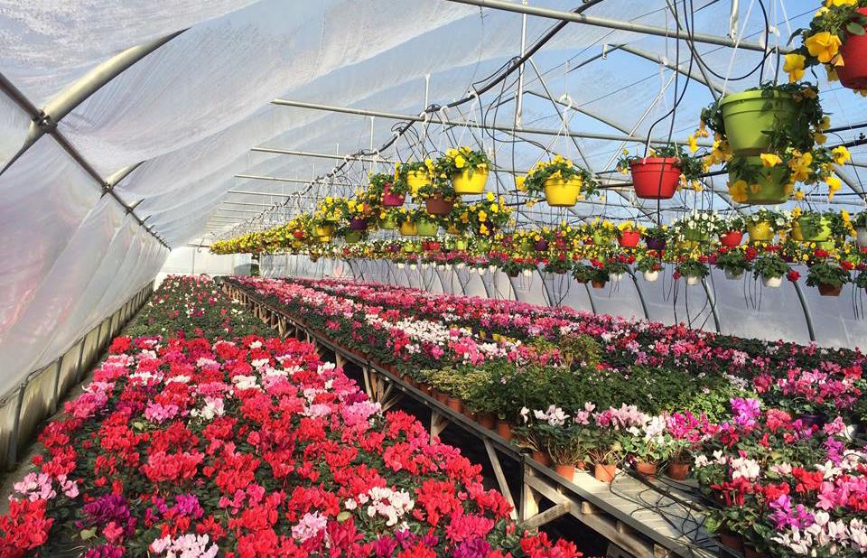 Creșterea plantelor în ghiveci, o soluție de business în 2019. Ca și o ciupercărie