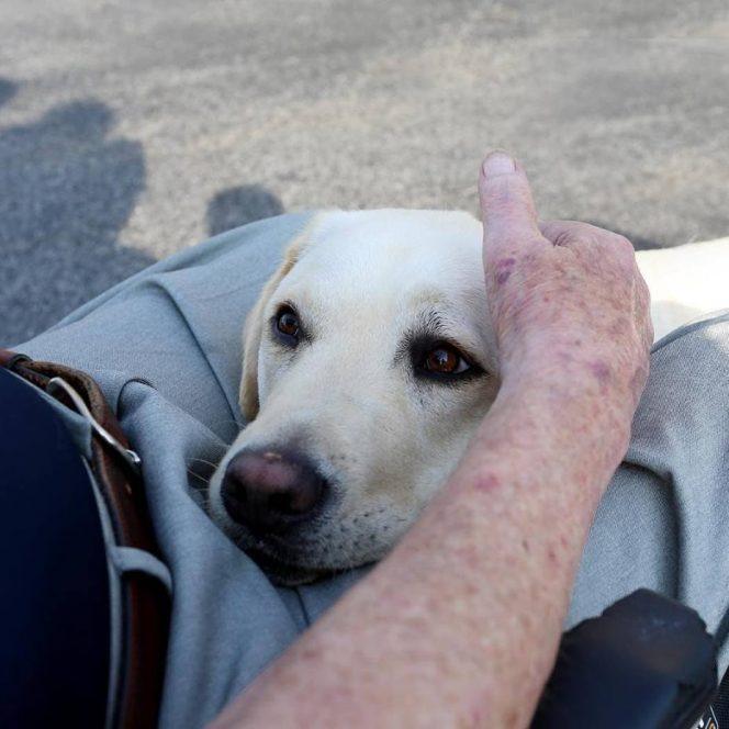 Sully, câinele președintelui