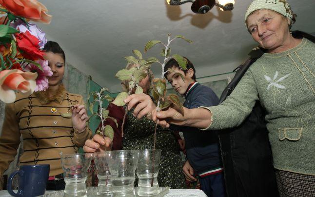 Tradiții de Moș Nicolae: puneți crenguțe de pomi fructiferi la înmugurit până de Anul Nou