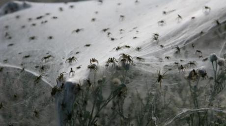 Australia, acoperită de o ploaie cu păianjeni!
