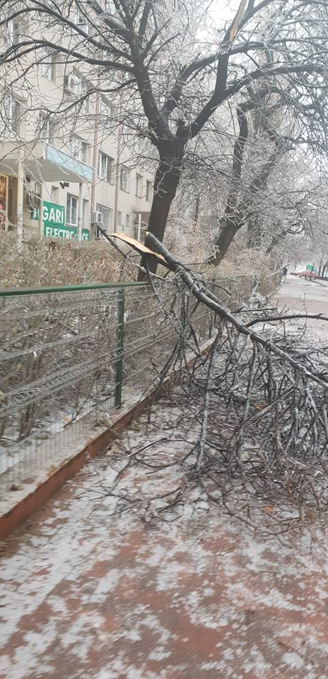 Copaci rupți din cauza gheții, în București