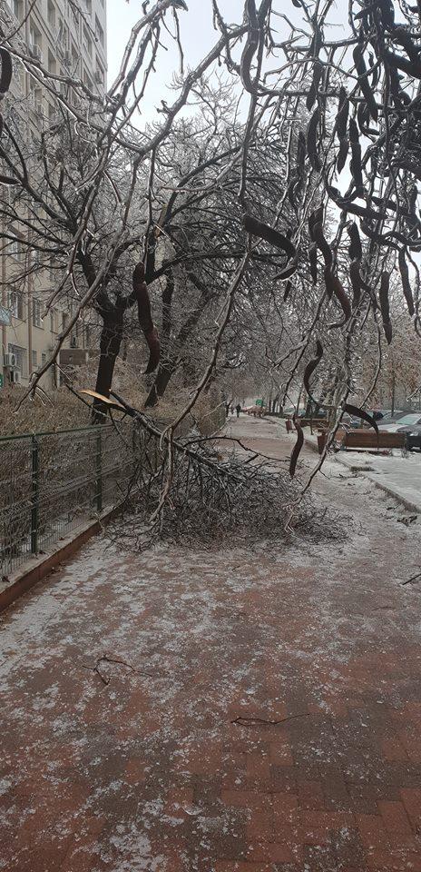 Copaci rupți din cauza vremii