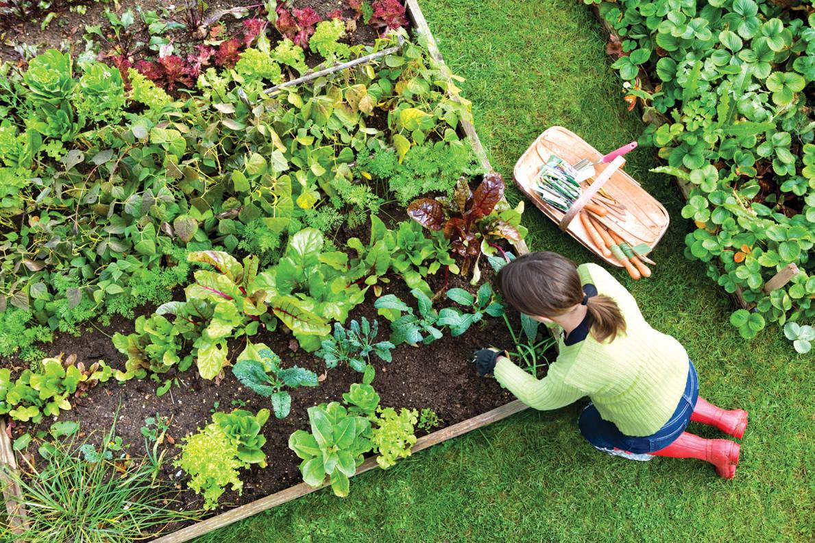 5 modalități eficiente prin care să utilizezi bicarbonatul de sodiu în grădină