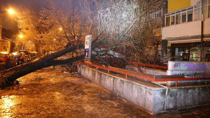 Noapte de coșmar din cauza înghețului și poleiului! Copaci căzuți peste mașini și întreruperi de energie electrică. Peste 100 de intervenții ale ISU