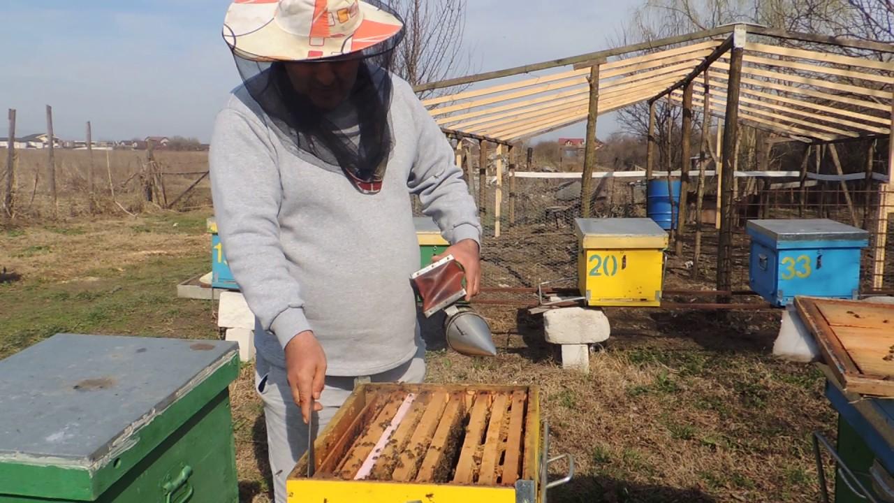 """Propolisul este un produs natural elaborat în """"farmacia albinelor"""" și colectat cu grijă de apicultori"""