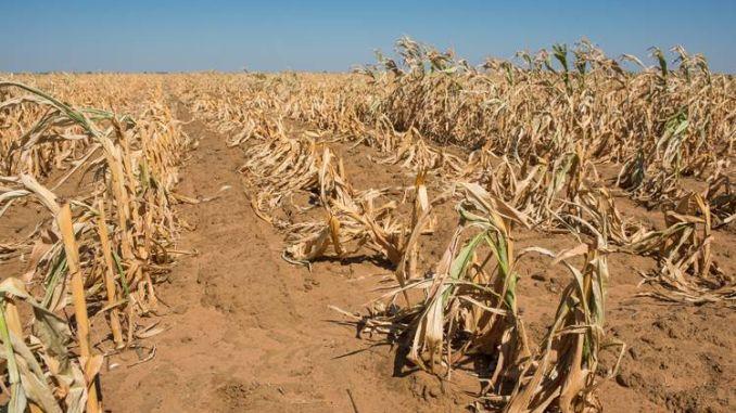 Rezervele de hrană ale planetei se împuținează tot mai mult