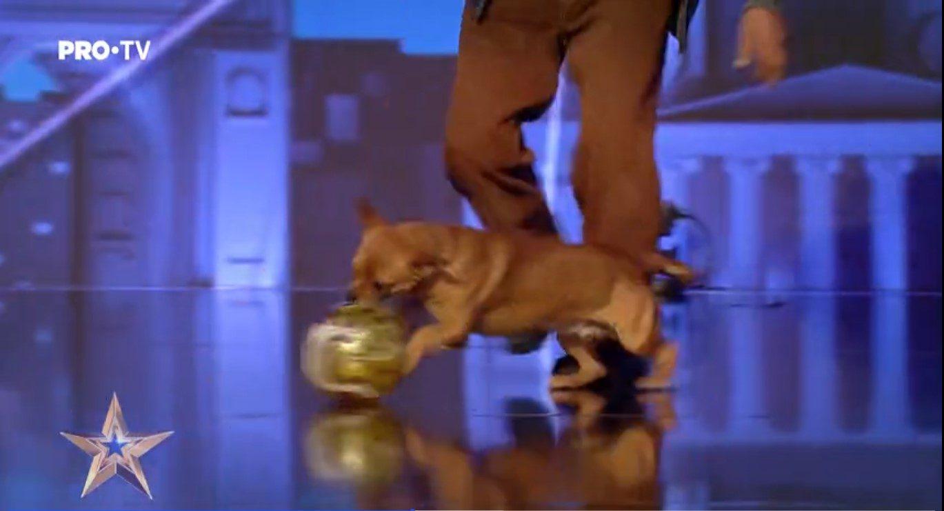 Concurentul din Vrancea a vrut să arate cât de talentat e câinele Becali