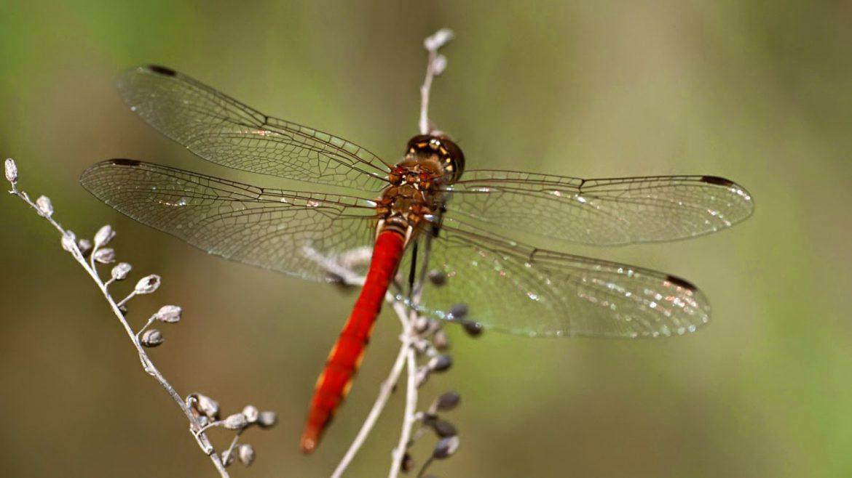 Jumătate din insectele de pe Pământ vor dispărea în următoarele decenii