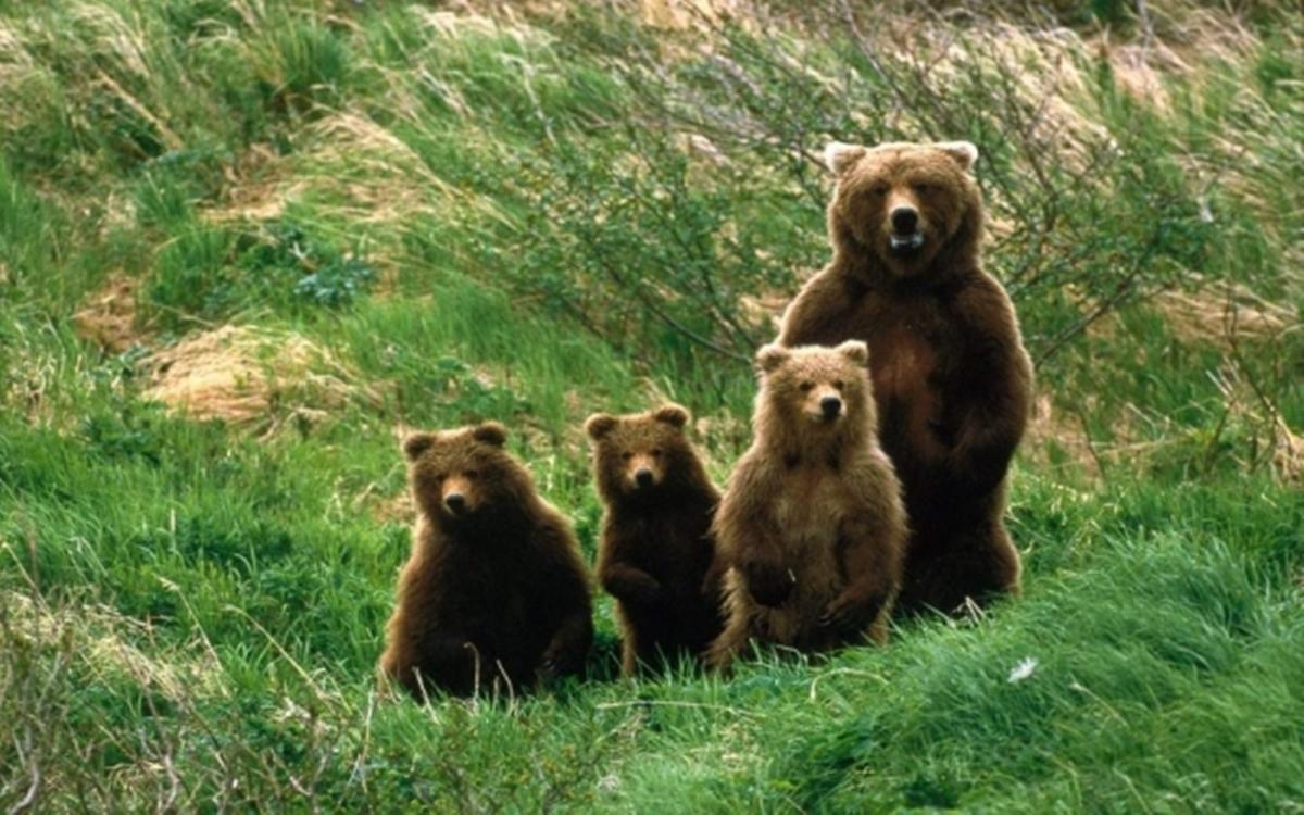 Urșii din Ardeal prevestesc primăvara prin anumite semmne distincte! De 10 ani nu dau greș! Ce s-a întâmplat ieri