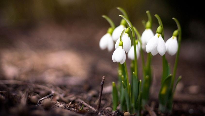 Vremea de 1 Martie! Prognoza meteo pentru săptămâna 25 februarie - 3 martie