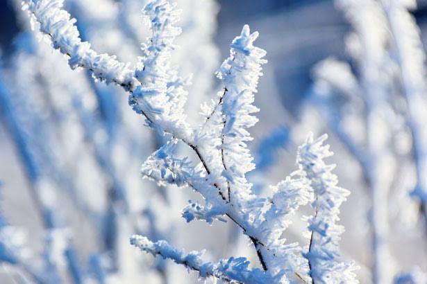 La munte vor fi și - 12 grade Celsius