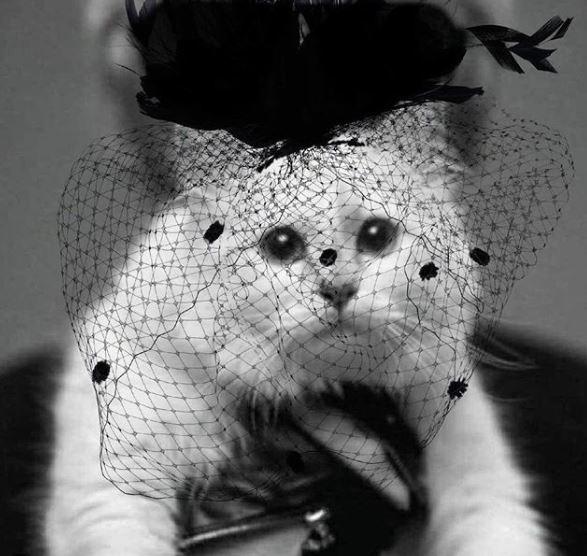 Choupette, pisica lui Lagerfeld, în doliu!