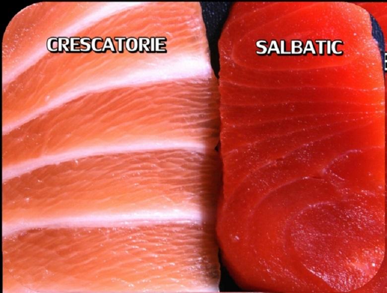 Carnea somonului de crescătorie este total diferită de carnea somonului crescut în libertate și favorizează apariția cancerului. E valabil pentru toți peștii de cultură