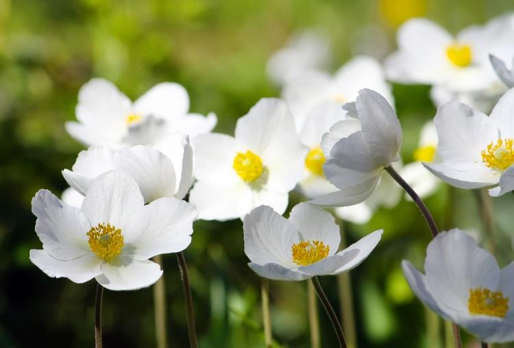 Care sunt florile care ne reprezintă în fucnție de zodie: