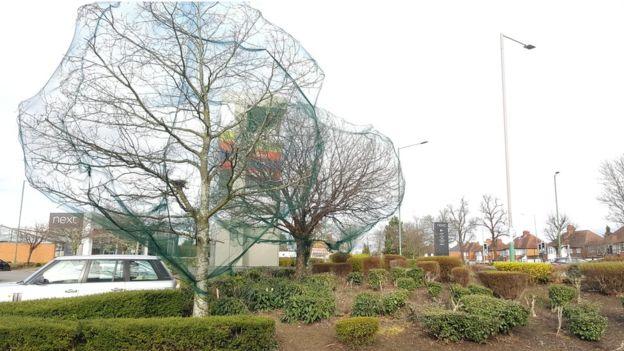 Motivul pentru care oamenii au început să acopere copacii cu aceste plase ciudate. FOTO