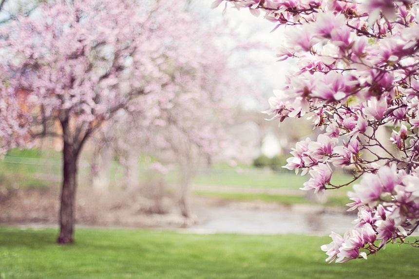 Vreme frumoasă se anunță în cursul zilei de joi, 7 martie