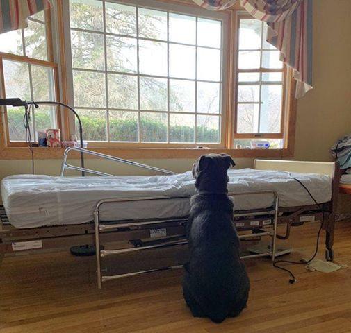 Simpaticul patruped sta nedezlipit de patul de spital al stăpânului său decedat. Sursa foto: Facebook