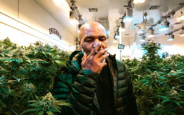 Mike Tyson fumează lunar iarbă în valoare de 40.000 de dolari