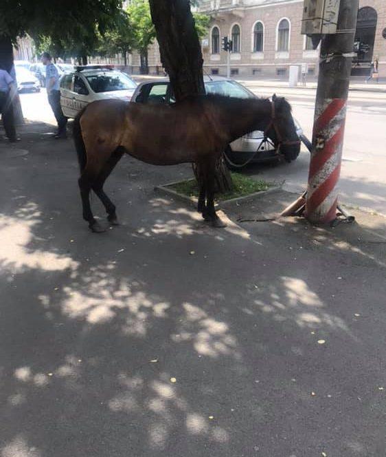 Accident la Voinești, unde o mașină a lovit un cal lăsat liber pe stradă