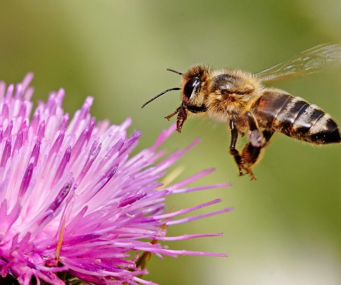 Albinele sunt cele mai importante ființe de pe pământ