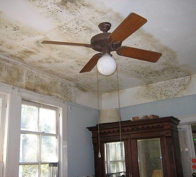 Mucegaiul din locuință ne dă seriase bătăi de cap. Sursa foto: macostore.ro