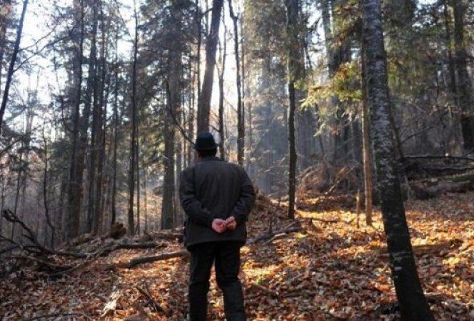 Încă un pădurar a fost agresat de hoţii de lemne