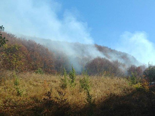 Incendiile de vegetație, tot mai dese pe teritoriul țării noastre. Sursa foto: mediafax.ro