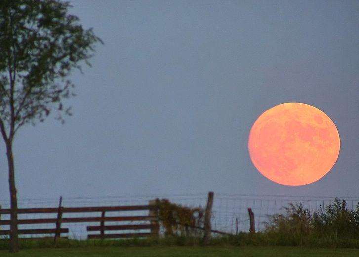 luna portocalie