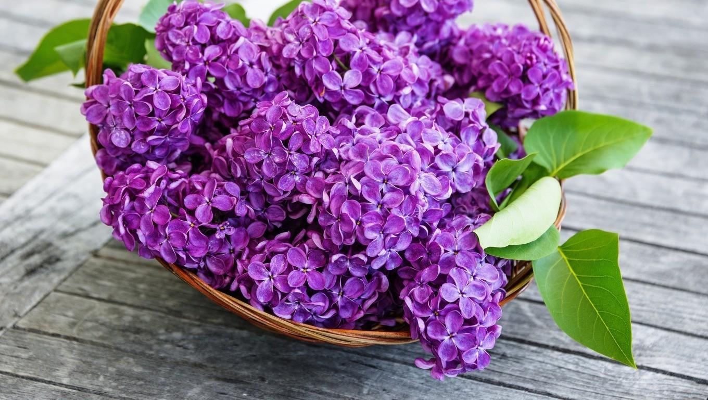 Florii 2020 Ce Nume Sunt Sărbătorite Pe 12 Aprilie Cui Trebuie Să Ii Spui De Fapt La Mulţi Ani Stiri Mondene